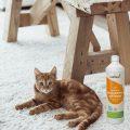 Geruchsentferner neben Katze