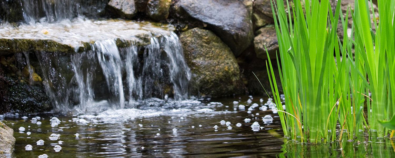 Wasserfall und Teichpflanze